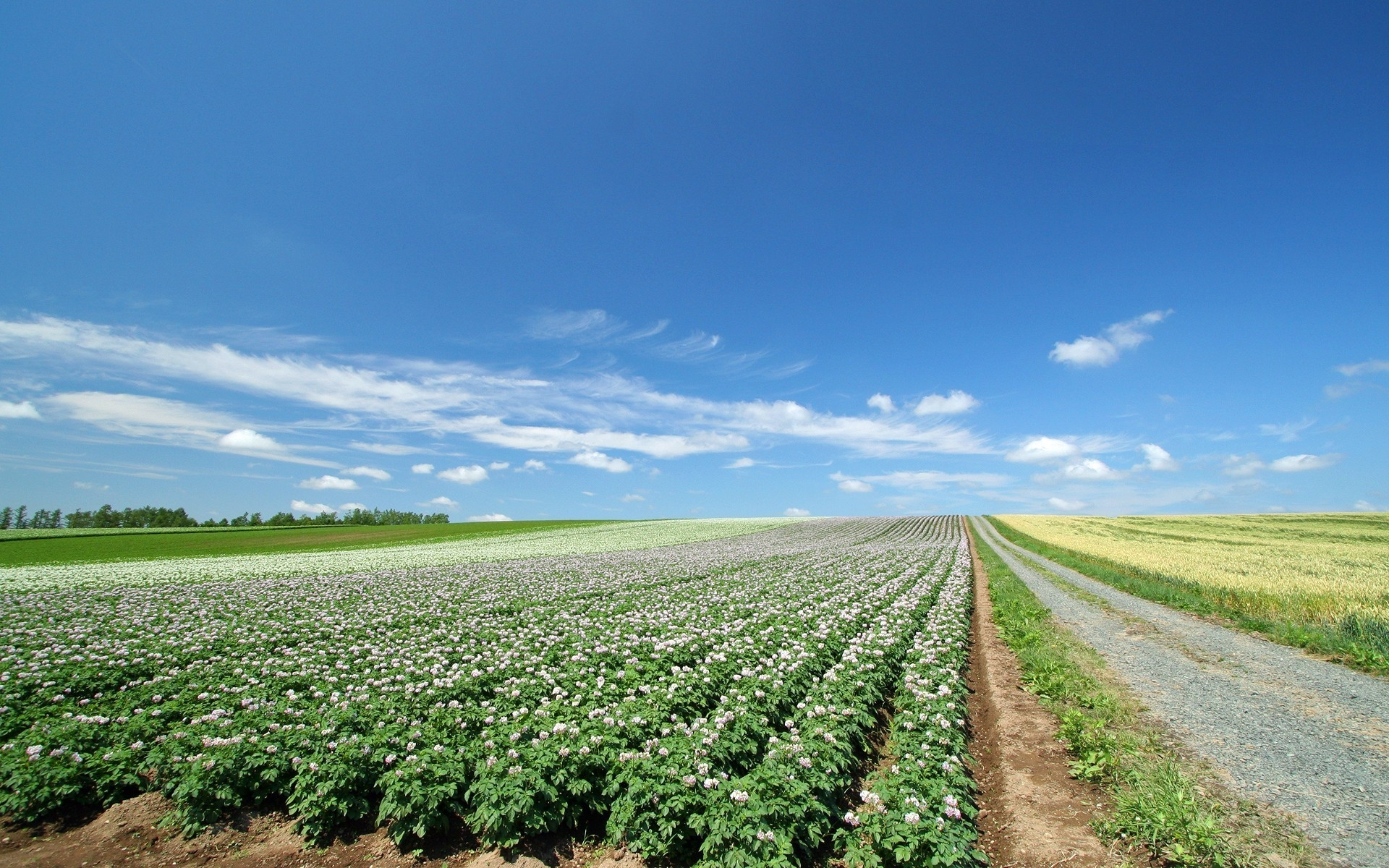 field_plantation_agriculture_30619_1920x1200